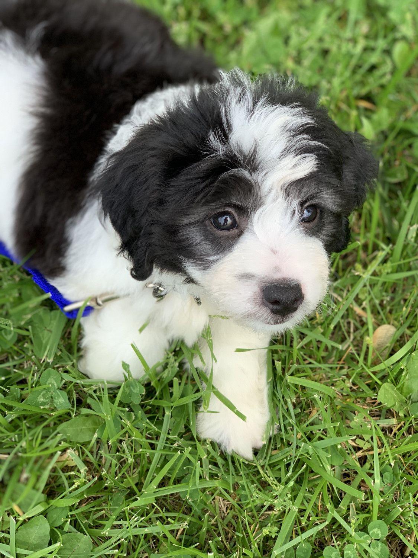 Pets for sale in columbia missouri on craigslist