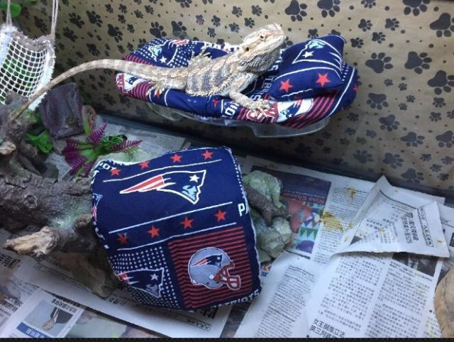 BEARDED DRAGON LRG RESTIN BED NFL PATRIOTS PRINT SET COVERS NO ATTACHABLE FRAME | eBay