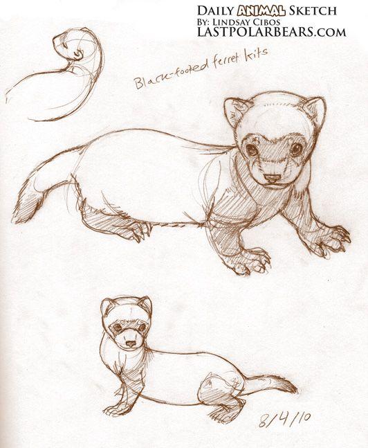 Daily Animal Sketch By Lindsay Cibos Animal Sketches Sketches