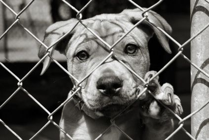 Texas Senate Bans Gas Euthanasia In Shelters Shelter Dogs