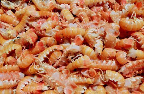 shrimp by indiga1  IFTTT 500px