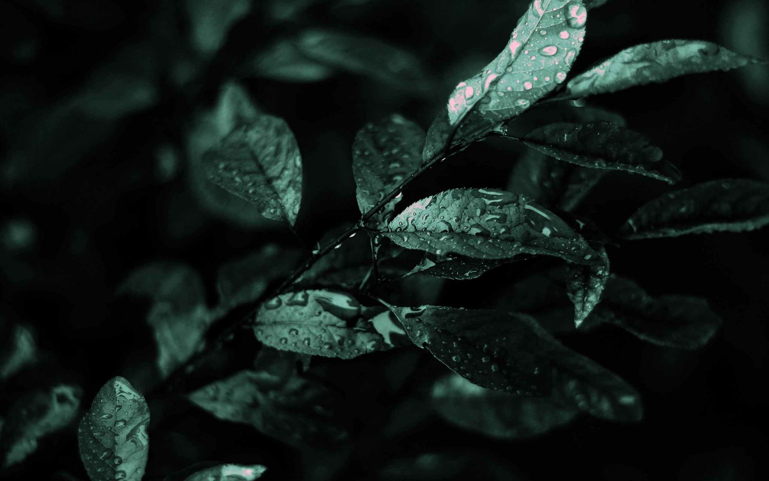 Water Droplets On Green Leaves Nature Flowers Water Drops Leaves Plants 2k Wallpaper Hdwallpaper D In 2021 Green Nature Green Nature Wallpaper Nature Wallpaper