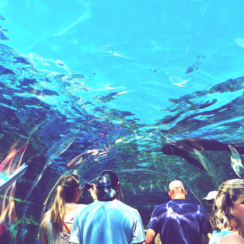 The Sea Lion exhibit at the Saint Louis Zoo is kinda magical.