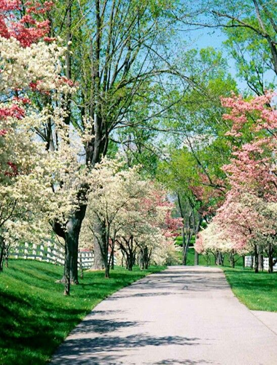 Beautiful Park Pictures Of Spring Flowers Dogwood Trees Pink Dogwood