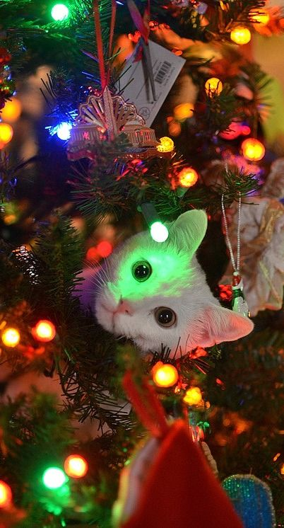 Pin by Sandy Carter on Animals At Christmas Pinterest Pet