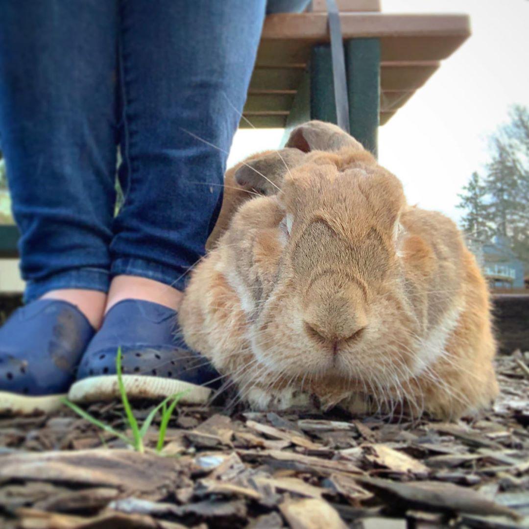 Pin on Rabbit