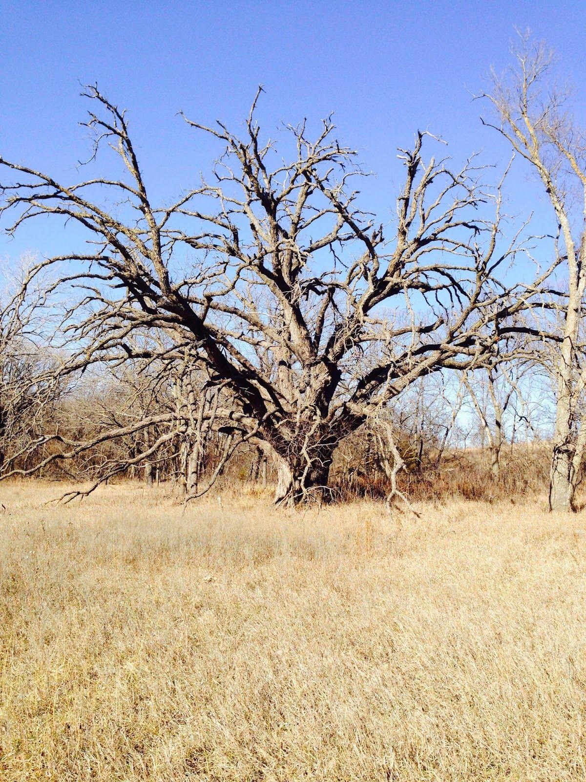 Tallgrass Prairie Studio: Energizing Spirit of the Prairie