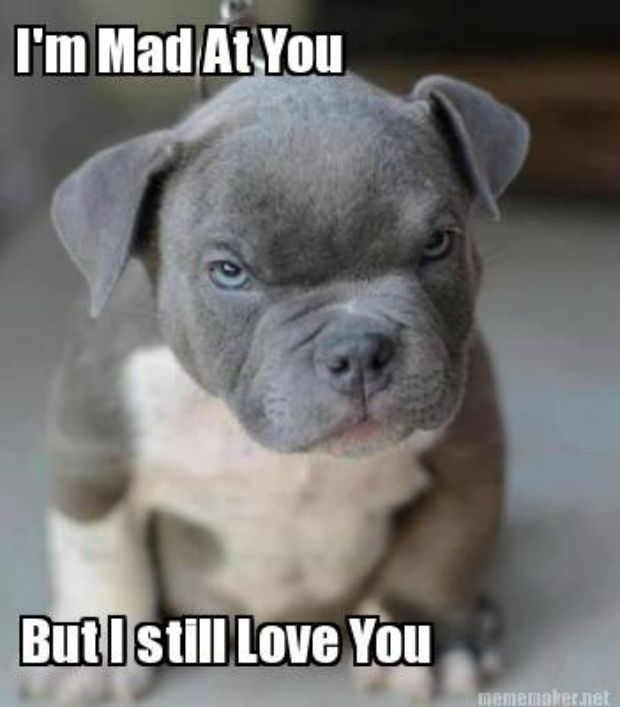 The 40 Best I Love You Memes That Are Cute Funny Romantic All At The Same Time Funny Animal Pictures Cute Animals Cute Baby Animals