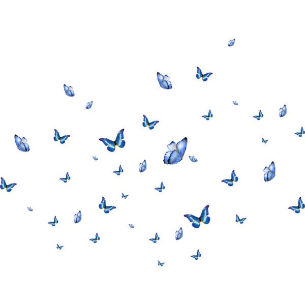 Papillons Liked On Polyvore Featuring Effect Butterfly Wallpaper Blue Butterfly Cute Wallpapers