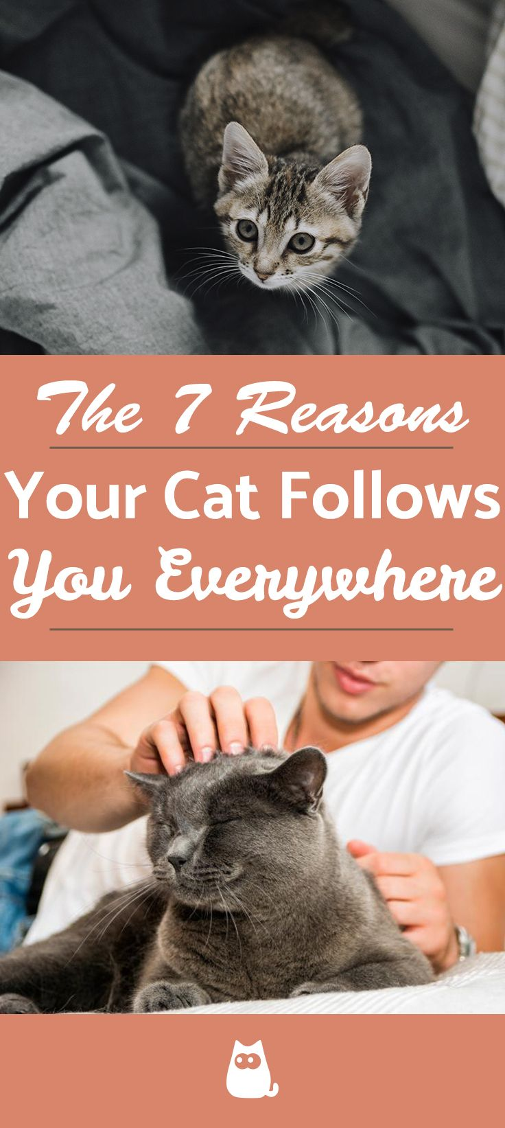 Why Does My Cat Follow Me Everywhere? Cats, Cat behavior