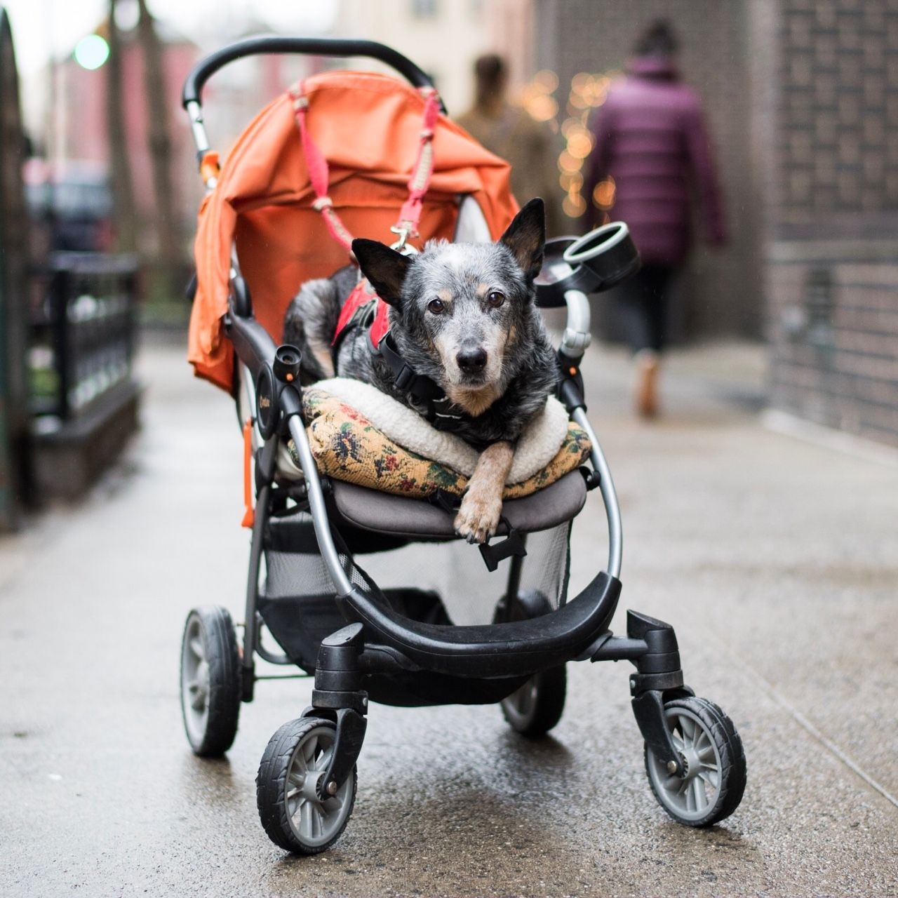 About Dog stroller, Pet stroller