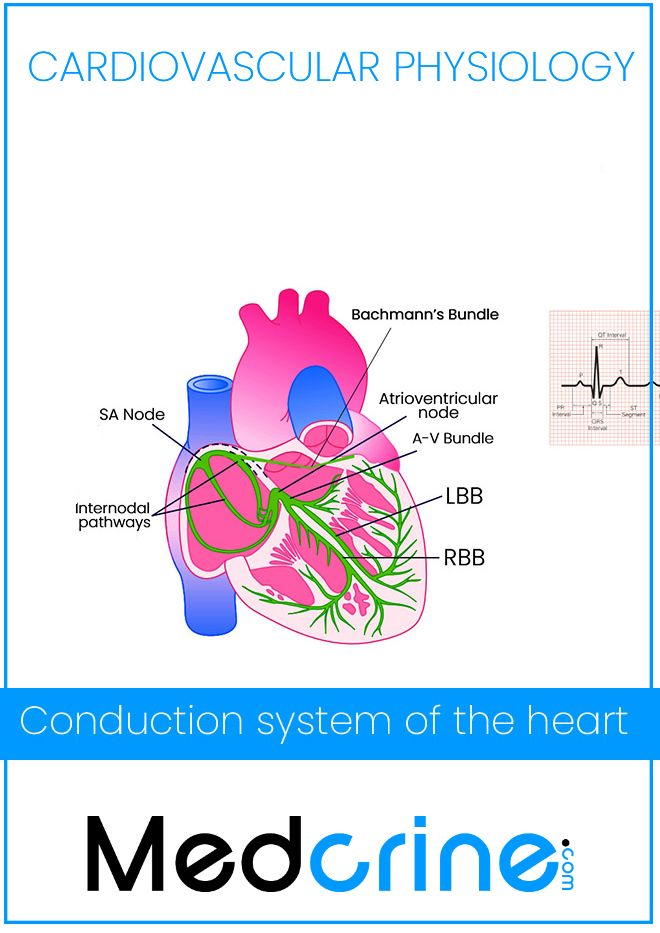 The conduction system of the heart physiology   Cardiac ...