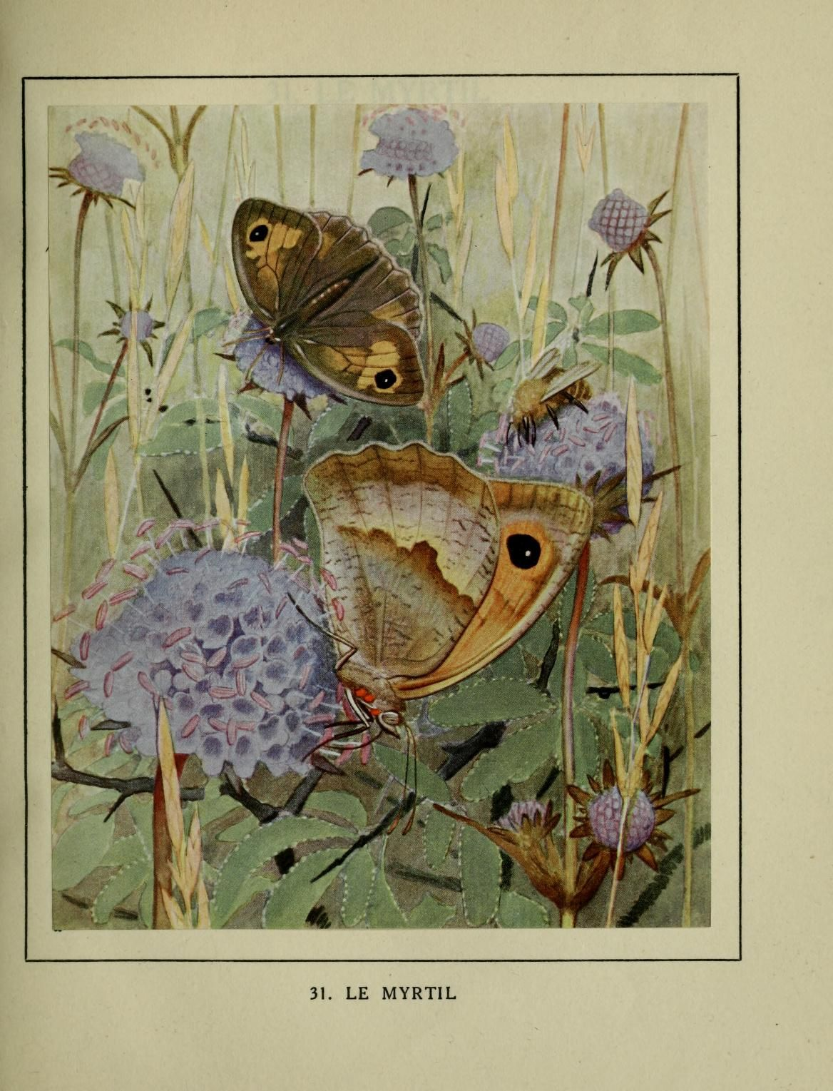 1 - Les papillons dans la nature : - Biodiversity Heritage Library