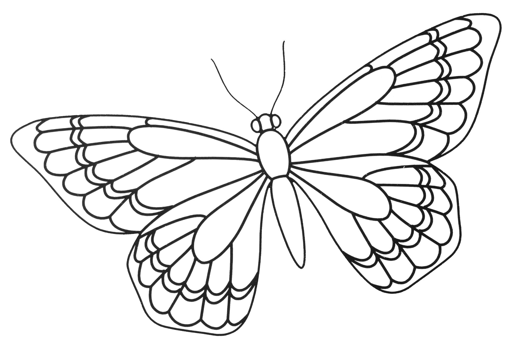 Butterfly Template Best photos