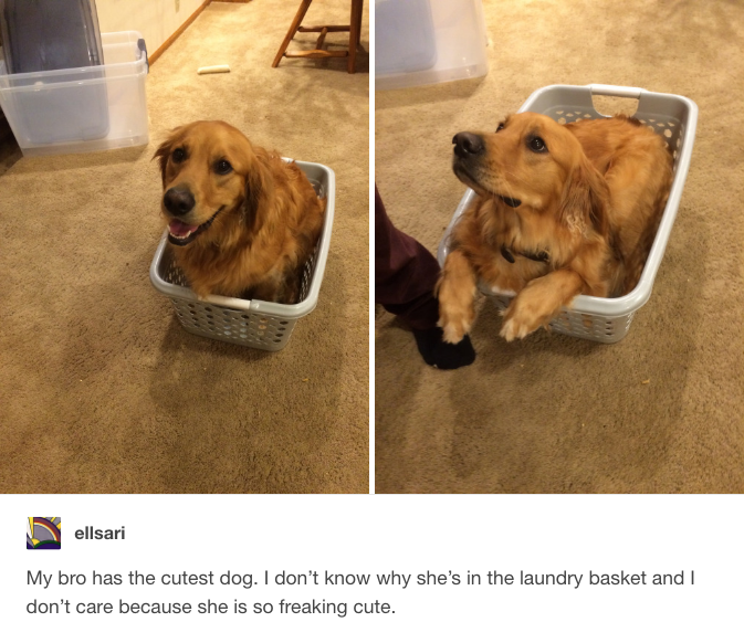 This Laundrybasket Cutie Feel Better The Cow And Make You Feel - 22 pictures that will make you feel better about the world