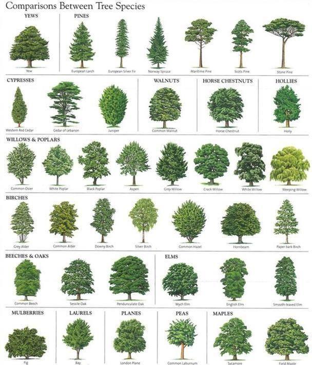 Identifying Native Trees