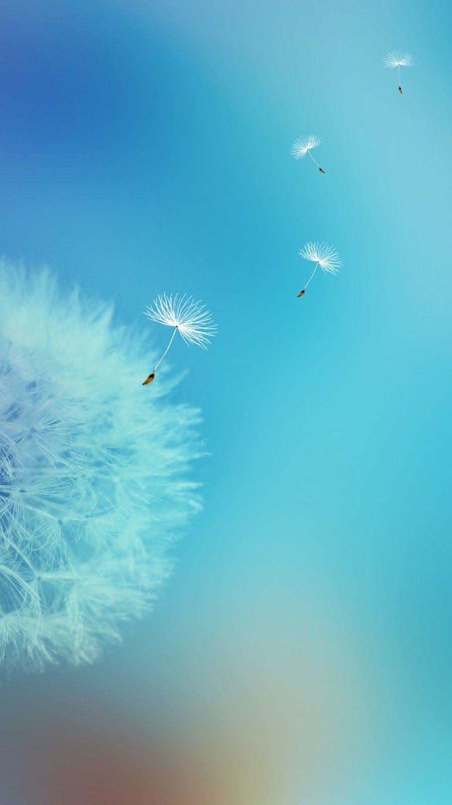 Super Dandelion+Flower+Wallpapers+Galaxy+S7+Edge.jpg (900×1600) | Galaxy  RF84
