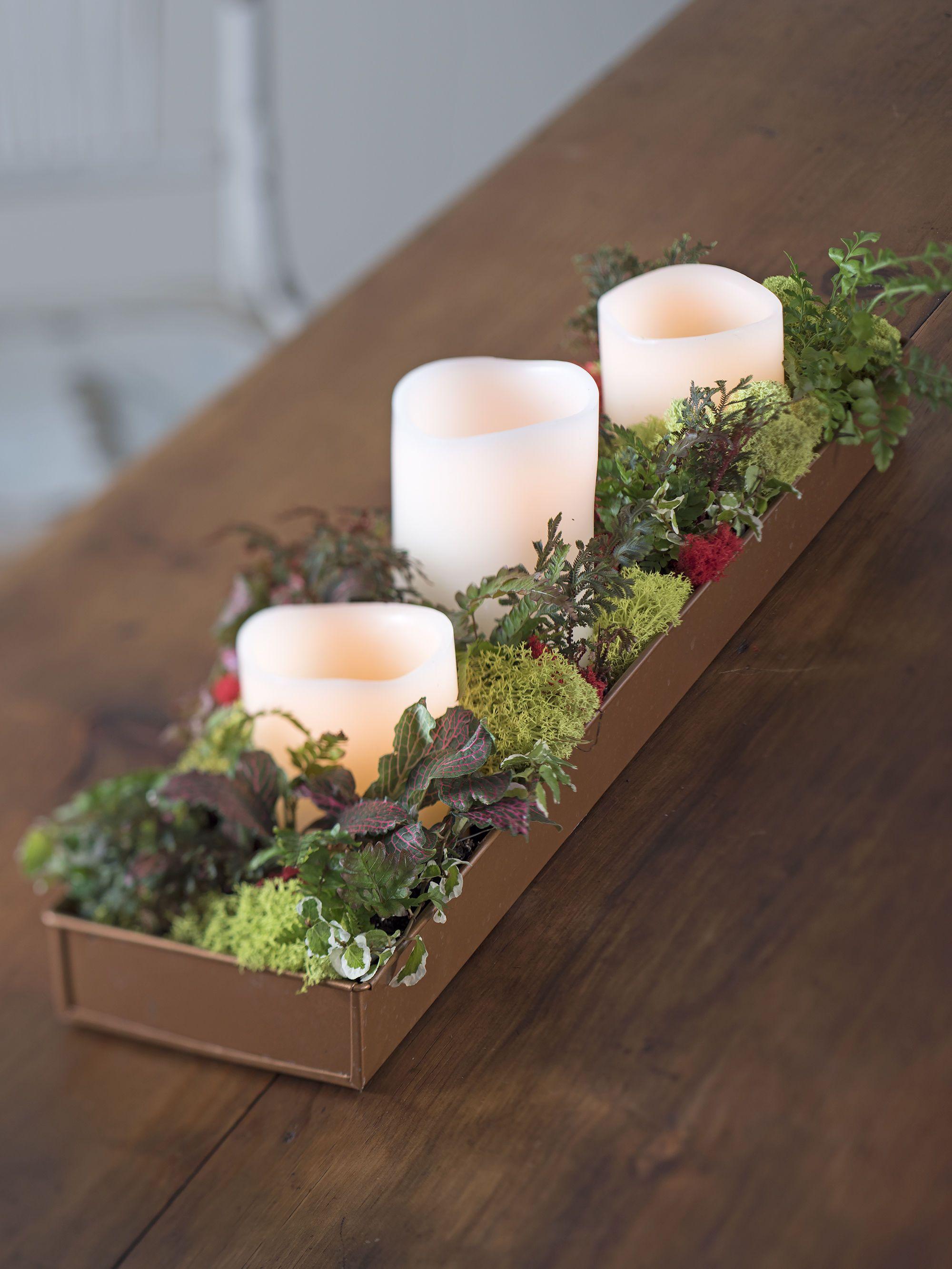 Indoor Succulent Garden - Lily Pad Succulent Planter | Gardeners.com ...