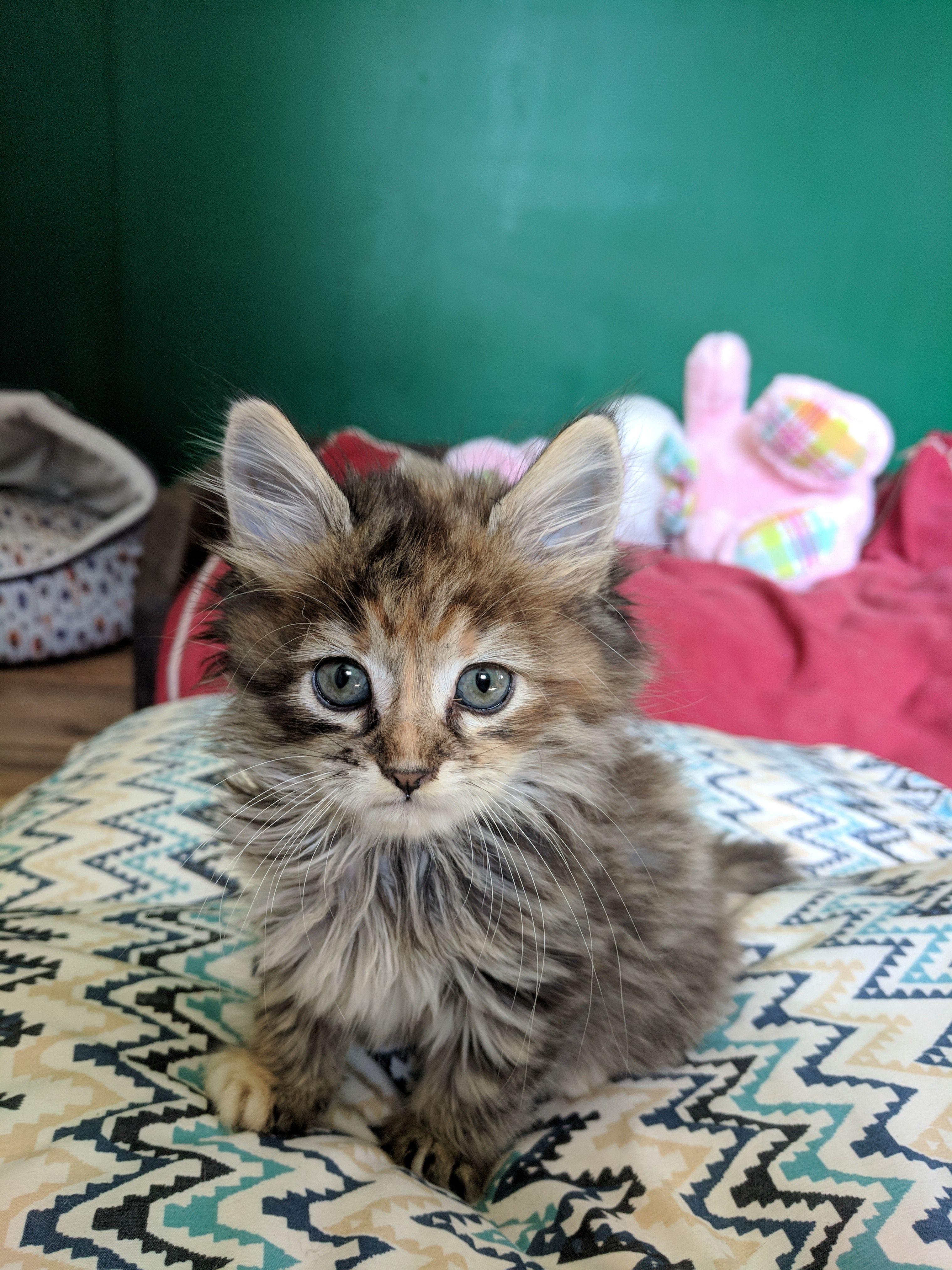 Modern Cat S Photo Contest Chloe Kittens Cutest Cat Allergies