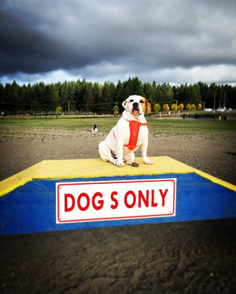 Making sure the dogs only rule stays in place at Hawk's Prairie Dog Park - Lacey, WA - Angus Off-Leash #dogs #puppies #cutedogs #dogparks #lacey #washington #angusoffleash