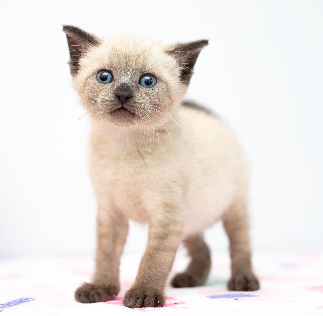 The Simple Guide Of Feeding Kittens Feeding Kittens Kitten Formula Kittens