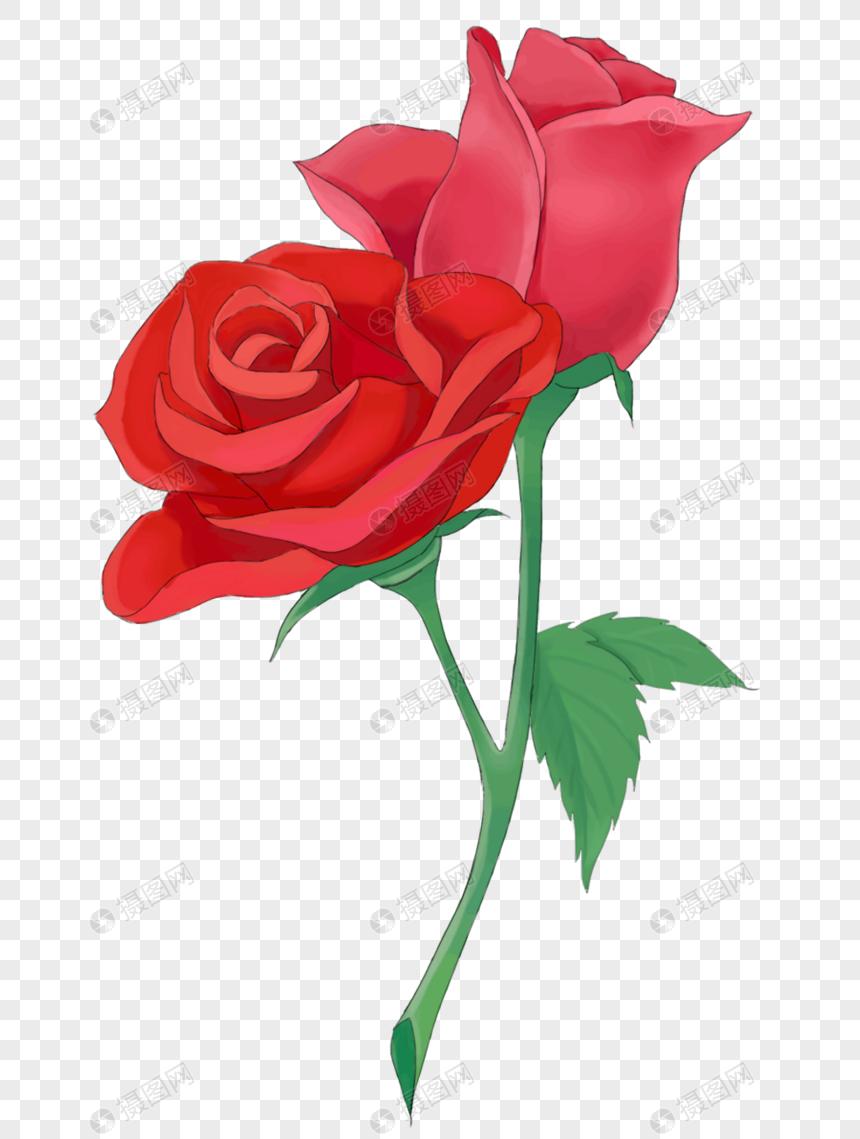 Bunga Mawar Pink Png : bunga, mawar, Bunga, Mawar, Roses, Drawing,, Rose,, Flowers