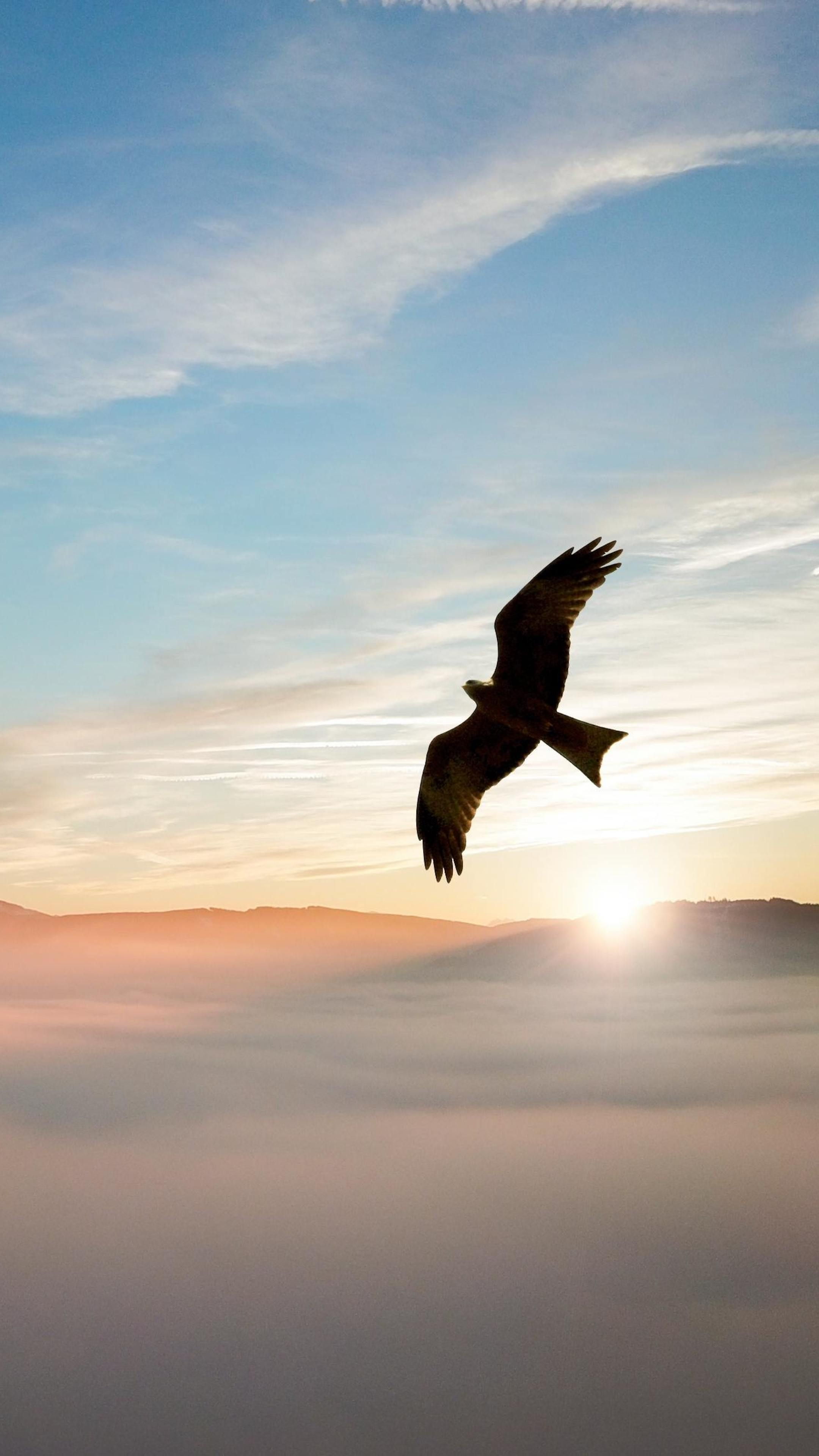 Animals Bird Flying Over Clouds 4k Wallpapers Phone Wallpaper Qhd Wallpaper Wallpaper