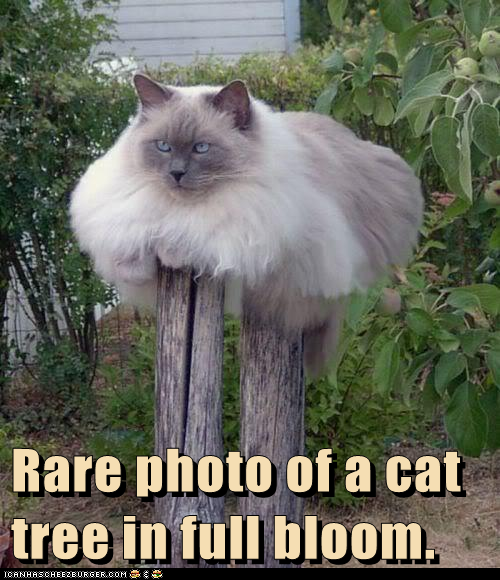 So Majestic Cheezburger Funny Cat Pictures Funny Animals Cat Jokes