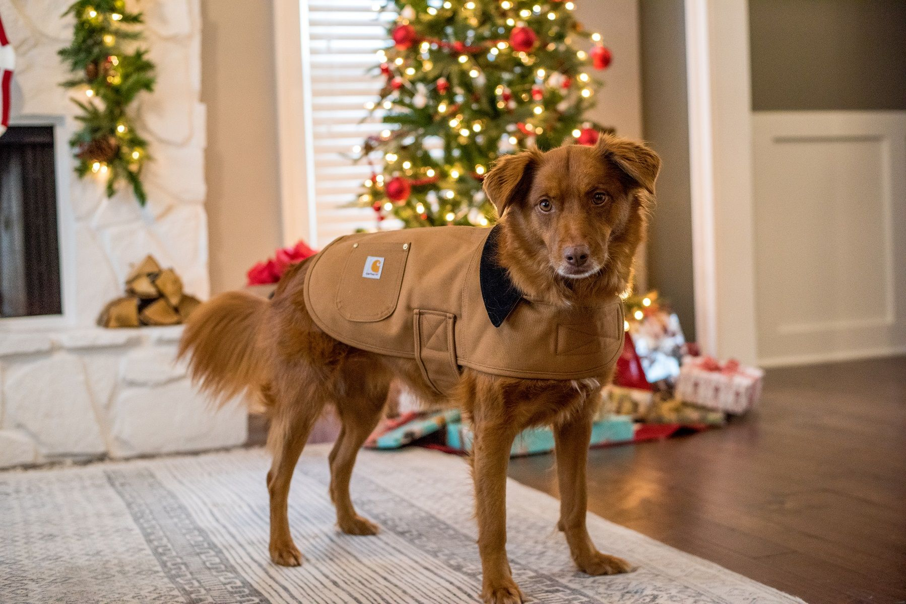 Carhartt dog bed. Chet can be like Jim! (With images