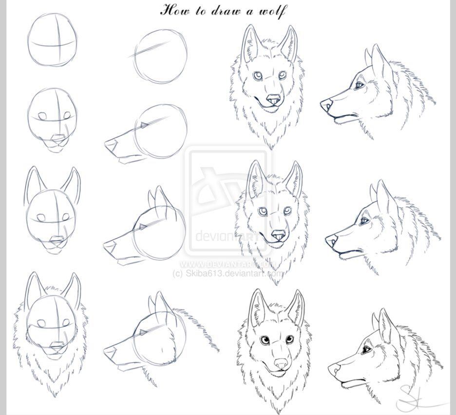 How To Draw Wolf Heads Wolf Face Drawing Wolf Drawing Animal Drawings