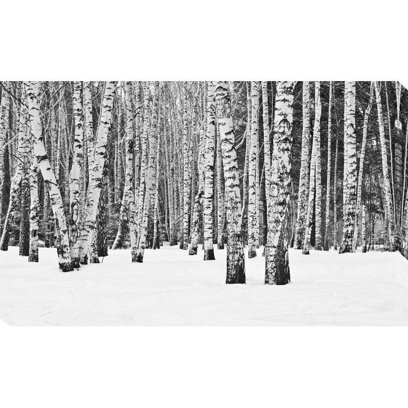 Birch Trees In Winter Photographic Print On Wrapped Canvas Tree Wallpaper Birch Tree Wallpaper Forest Wallpaper