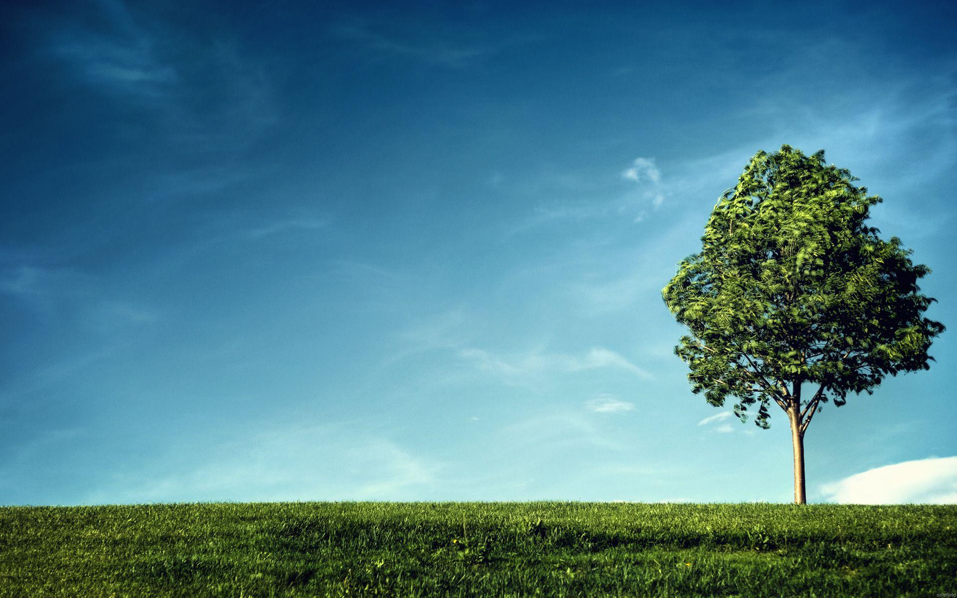 Tree Wallpaper HD #WYv | Earth | Pinterest | Wallpaper