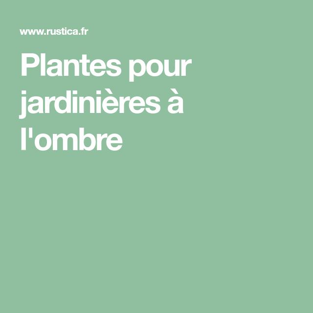 plantes pour jardini res l 39 ombre la grosse plante. Black Bedroom Furniture Sets. Home Design Ideas
