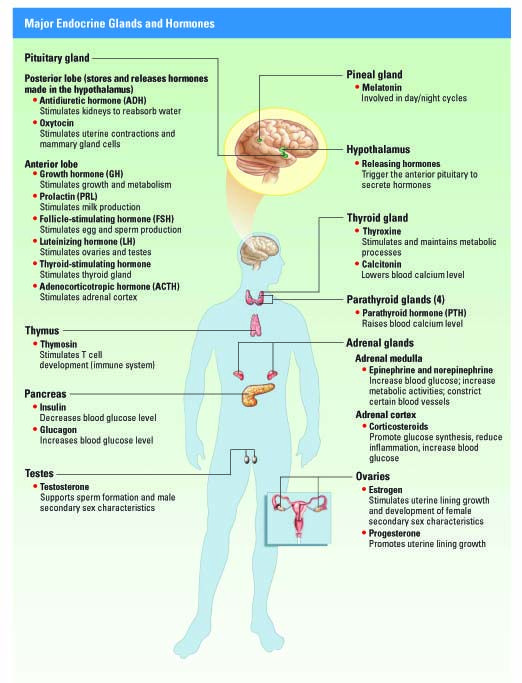 excretory system disorders | endocrine system disorders, Muscles