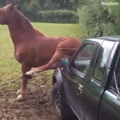 Funny Animals - animals funny watches - MyKingList.com