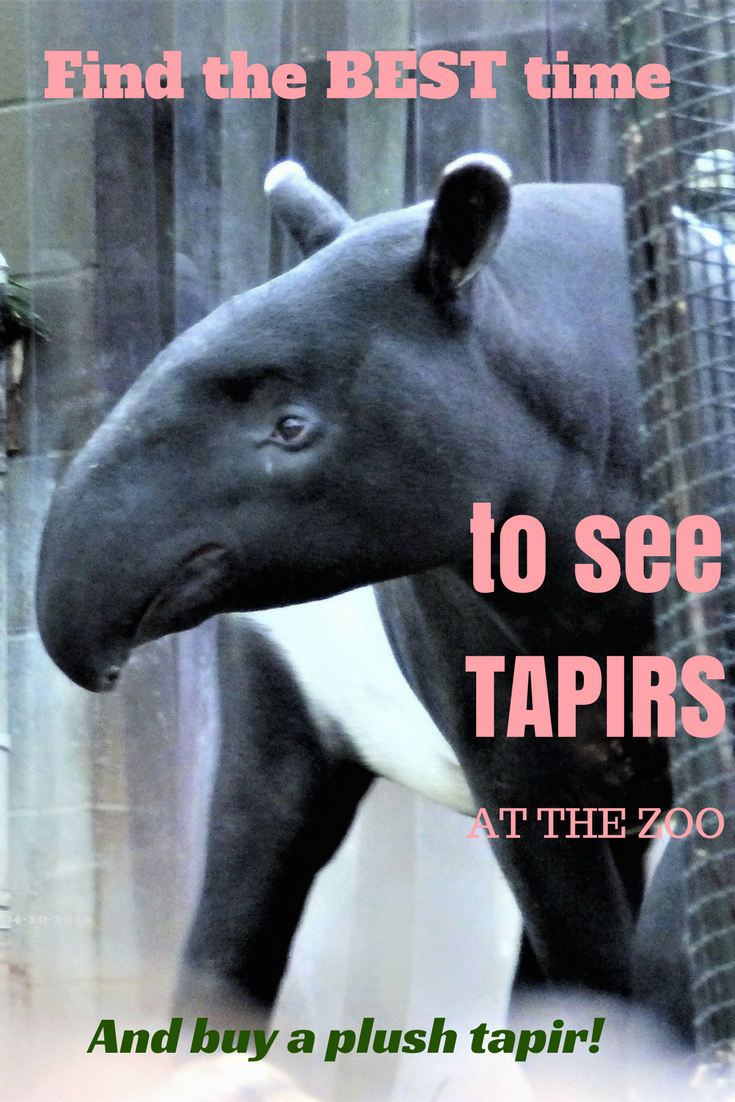 When Is The Best Time To See The Tapirs At The Zoo Tapir Animal Articles Woodland Park Zoo
