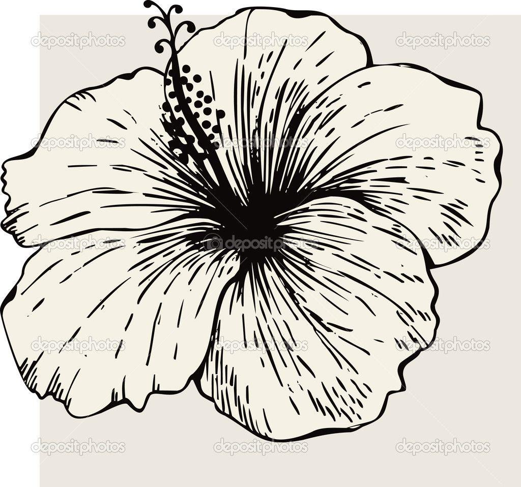 Hibiscus flower stock vector mur34 6608756 dccp pinterest clipart vector of hibiscus flower search clip art izmirmasajfo Images