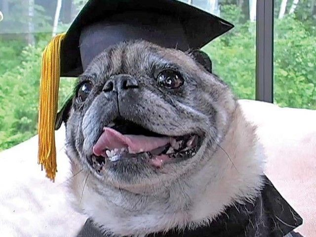 Online Colleges That Are Total Scams Finance Pugs Dogs Pug Love