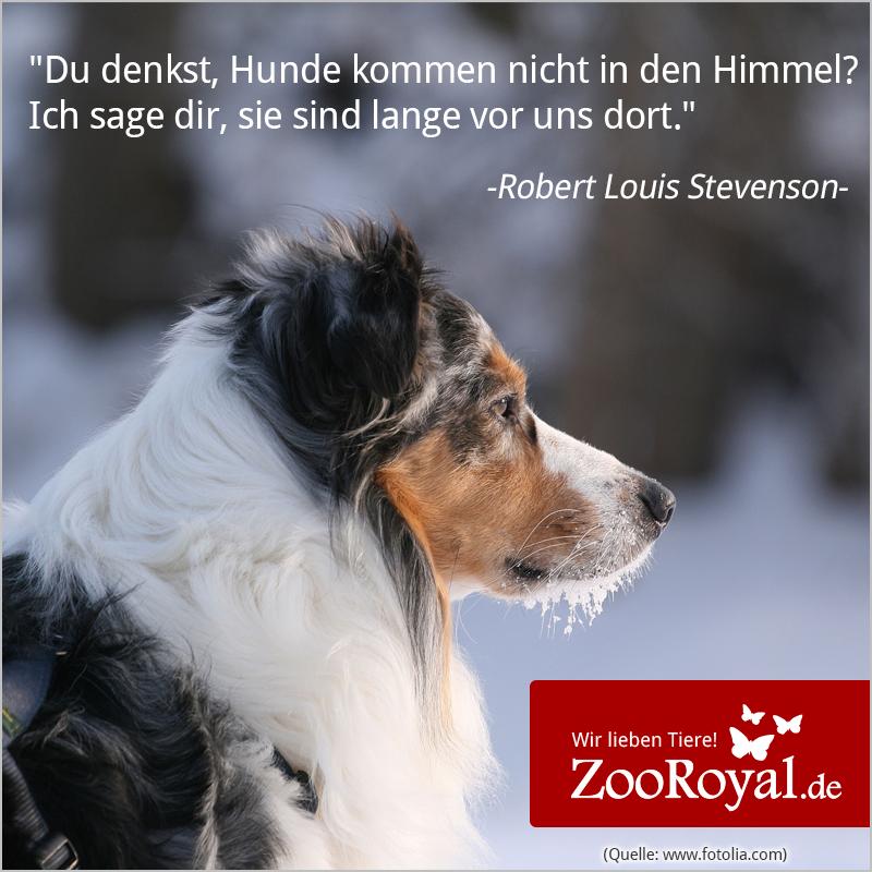 Hunde sind einfach wahre und treue Freunde! #dogs #doglove