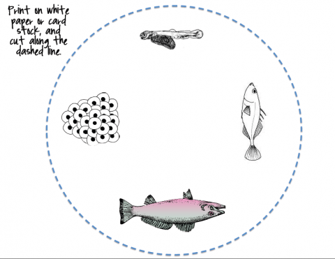 Life Cycle of a Fish Wheel | Edworld Exchange | Where Educators Buy and Sell Resources ...