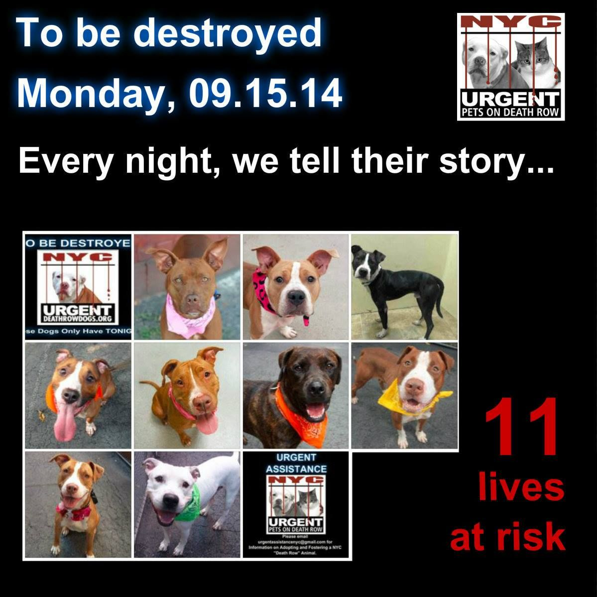 TO BE DESTROYED: 9 Dogs to be euthanized by NYC ACC- MON. 9/15/14. This is a HIGH KILL shelter group. YOU may be the only hope for these pups! ****PLEASE SHARE EVERYWHERE!!To rescue a Death Row Dog, Please read this:http://www.urgentpetsondeathrow.org/must-read/ To view the full album, please click here: https://www.facebook.com/media/set/?set=a.611290788883804.1073741851.152876678058553&type=3