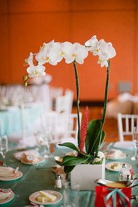 Wedding jessnerhale fan coral orchid plants and wedding live orchid plant wedding centerpiece faux red fan coral shells and sea glass beach seaside theme red white aqua junglespirit Gallery