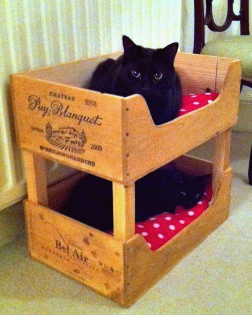 Photo of 19 most amazing ideas to make your cat a cool and cozy bed
