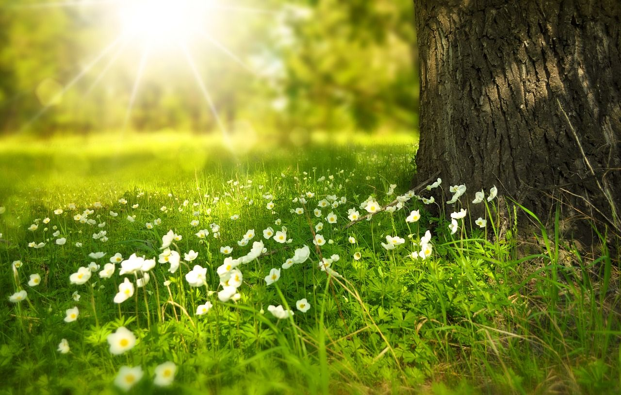 Free Image On Pixabay Spring Tree Flowers Meadow Lawn Care Ground Cover Plants The Meadows Beautiful landscape tree plants sun rays