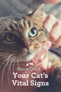 How to Check Your Cat's Vital Signs. Sick cat, Cat