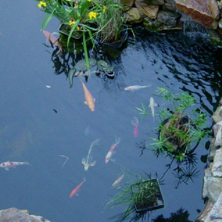 12 Easy DIY Koi Pond Projects You Can Build To Complete ...