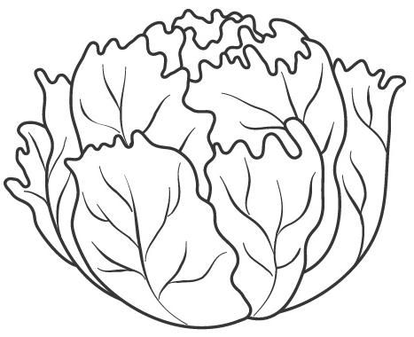 Lechuga Vegetable Coloring Pages Fruit Coloring Pages Coloring