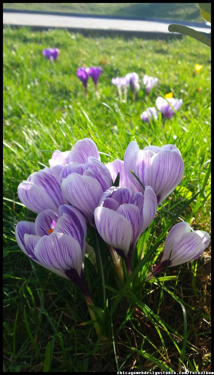 Pin By Chicago Webdesign Studio Ada On Fairy Dolls Wildwood Flower Purple Garden Flower Beauty