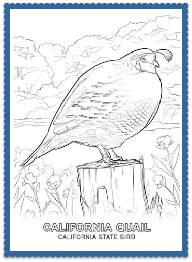 California State Bird QuailsColoring Pages