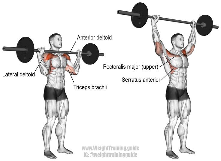 Barbell overhead press | Weight Training For Beginners ...